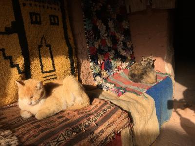 モロッコのドアとネコと雑貨 空港で買ったSIM モロッコトイレの秘密 ポケモン
