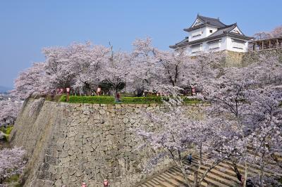 2019 さくらの名所を巡る旅《Part.3》豪壮な石垣群と1,000本の桜の競演 ~津山城&城下町探訪①~