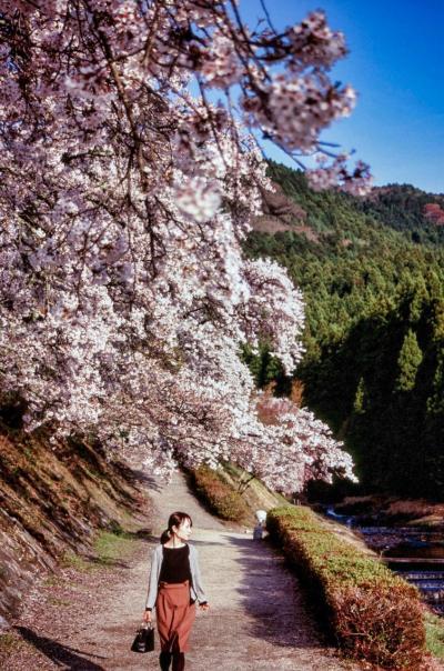 《2019.April》あみんちゅぶらり淡海を歩く旅そのXI甲賀編~SAKURAお花見の旅・さようなら平成編~