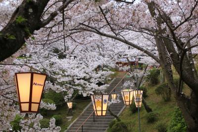 猫とウサギと桜三昧 春の尾道&大久野島の旅 (2)桜に包まれた千光寺公園