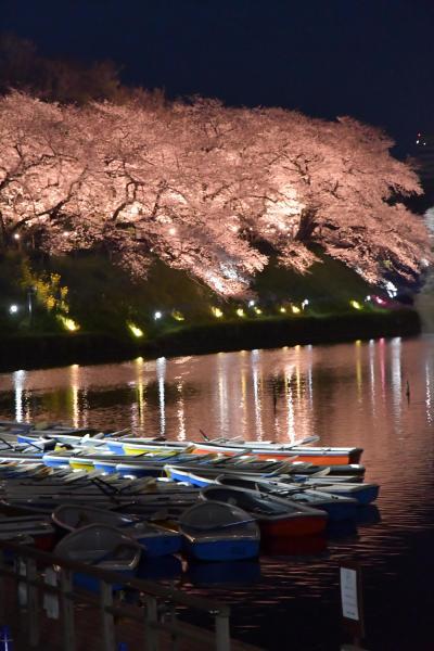 【九段下駅】昼も夜も美しい千鳥ケ淵の桜