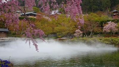 勝尾寺参拝との枝垂れ桜の花見 その4完。