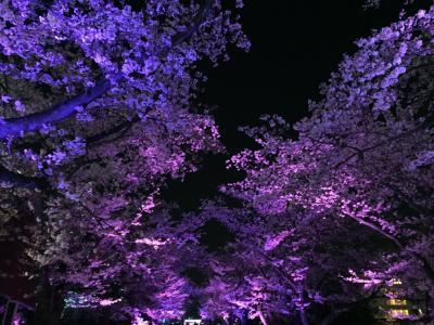 日帰り☆よみうりランド夜桜ジュエルミネーション