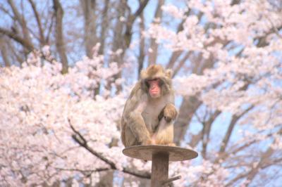 動物園で桜を見てきたお話 桐生が岡動物園2019年(1)