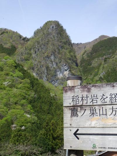 稲村岩尾根から鷹ノ巣山へ