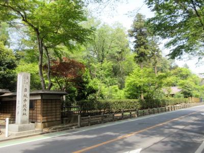 新緑の平林寺
