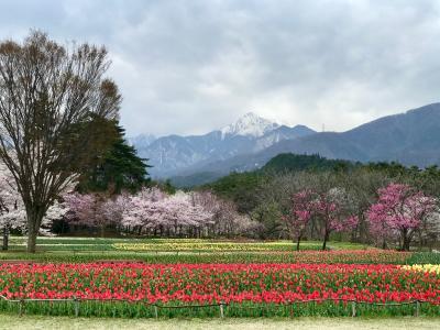 レンタカーで花と雪山を見る安曇野巡り