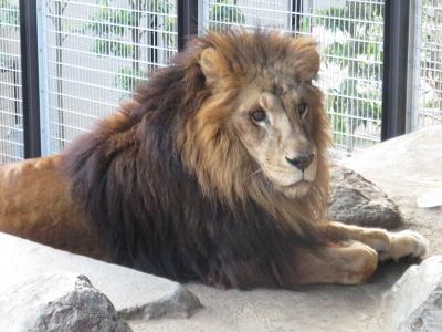 神戸市立王子動物園(沖縄旅の帰り道のおまけ②後編)