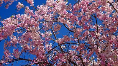 加西フラワーセンター(02) 園内風景と咲く花 その2。