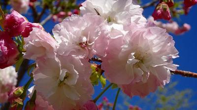 加西フラワーセンター(04) 園内風景と咲く花 その4。