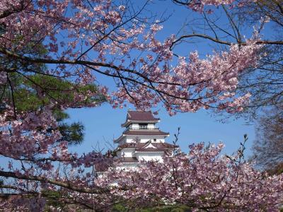 会津若松「鶴ヶ城」の桜と酒蔵ジャズライブ