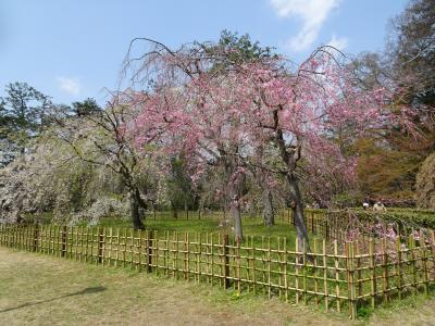 今の京都、どんなになっているだろう?