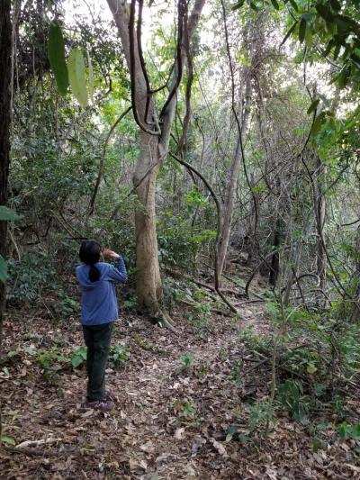 父娘2回目の2人旅 タイ中部ケンガチャン国立公園でヤイロチョウ探しとホアヒン観光 3日目