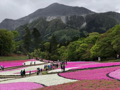 【iPhone Xで撮影】GWに秩父・芝桜を観光