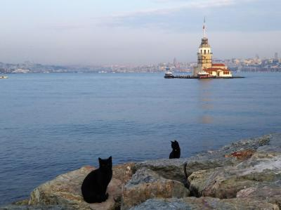 2019 ナントカなったよ!イスタンブール 12 メトロビュスでボスポラス大橋を渡ろう