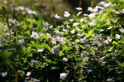 ◆福島・四季・彩々・Part,81・仲春の候