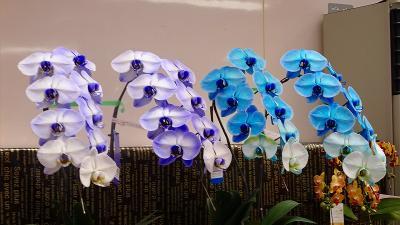 加西フラワーセンター(07) 園内風景と咲く花 その7完。