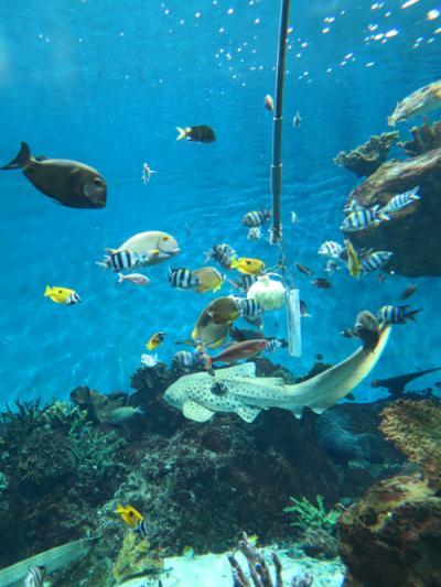 2017年 父と旅した鹿児島2泊3日(4)最終日はいおワールドかごしま水族館で、ジンベイザメの餌やりを鑑賞