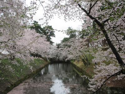 みちのく三大桜名所を巡るバスツアーに参加して