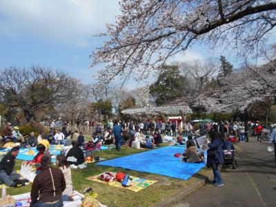 市川 桜 お花見
