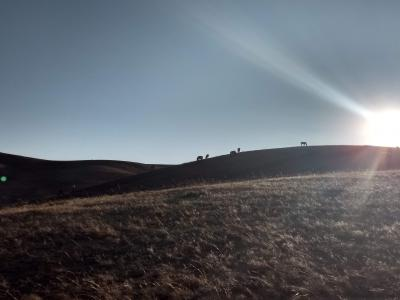 モンゴル家族旅行2019GW