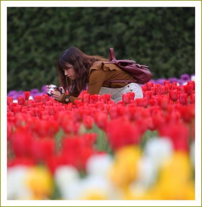 Solitary Journey[1984]感動の花風景をお届けします。花はみんなをしあわせにする♪<世良高原農場チューリップ>広島県世羅町