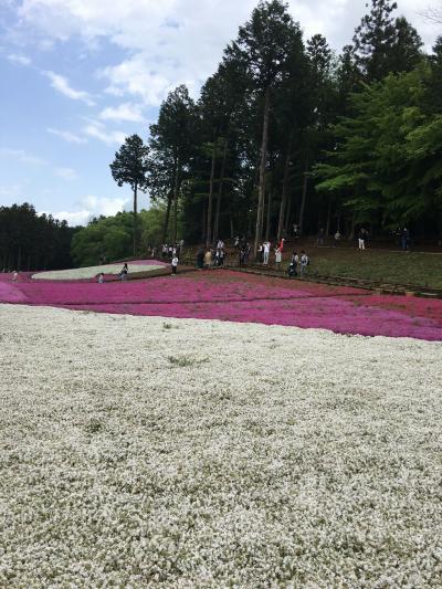 春のお散歩 羊山公園の芝桜、札所12番15番、今宮神社