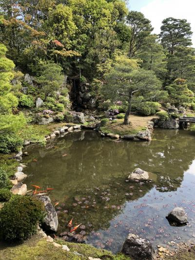 新緑の京都①~令和のはじまりを京都で過ごす☆仁和寺・長楽寺・祇園~