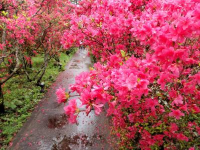 雨に濡れ10万本のつつじは艶やかに☆小室山公園&ステンドグラス美術館―GW伊豆旅・雨に泣いた1日目編
