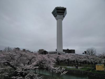 桜咲く函館五稜郭と北斗桜回廊 日帰り