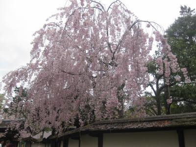 春旅・みちのく花の旅 大内宿~会津若松鶴ヶ城