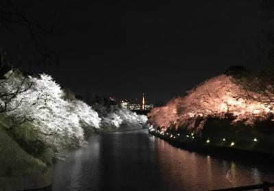 平成最後の桜(その2)夜の千鳥ヶ淵!
