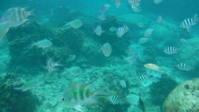 YOUは何しに沖縄へ?No2~~沖縄本土の海も綺麗でした!!