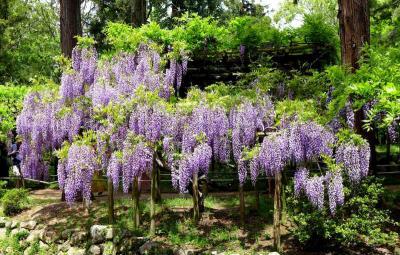 春日花ごよみ!春日大社萬葉植物園