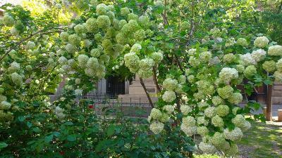 ゆったりミラノ滞在の旅(05) ブレラ植物園の見学。