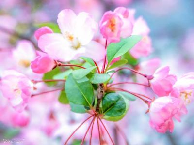令和の年 花のみち 宝塚ホテル 新しくなるので 楽しみです!