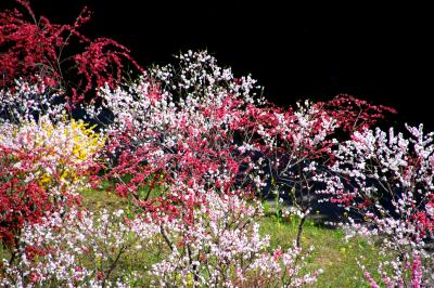 ◆極彩色の花曼荼羅~山森沢・桃源の里 Part1