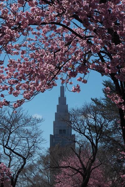 冬から春へ☆光を纏った花たちの詩(2019ver.)☆#2 桜 さくら サクラ…