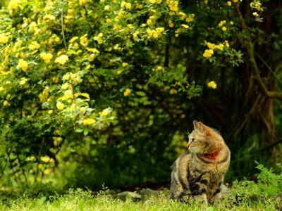 ドリプレのネコちゃんと遊ぶ