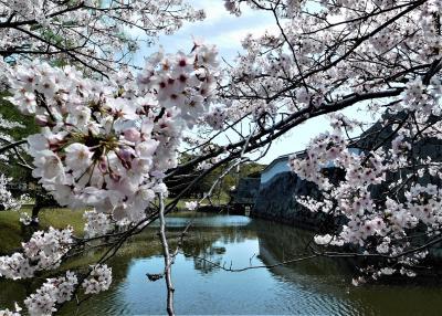 桜のころ、播州赤穂まで