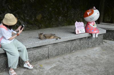 2018年夏、台湾 男一人旅 (4日目猴?猫村と台湾大学他、帰国)(猫写真多め)