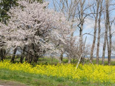 【角館&男鹿】桜前線を追いかけて① 0日~2日目