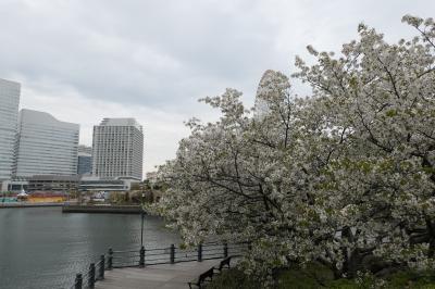 春の横浜♪ Vol.1:横浜ロイヤルパークホテル「フローラ」のランチと汽車道♪