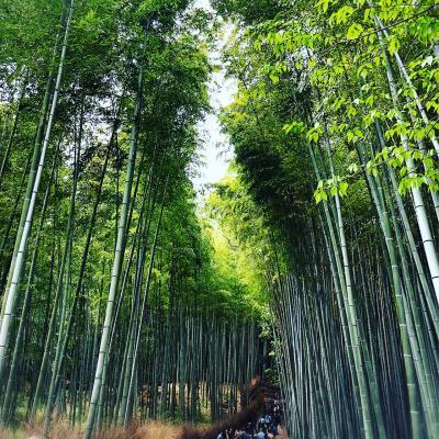 嵐山公園の展望台を目指し、辿り着いたのは小倉山山頂でした