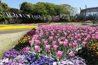 春の川口グリーンセンター♪ Vol.1:カラフルな春の花壇♪