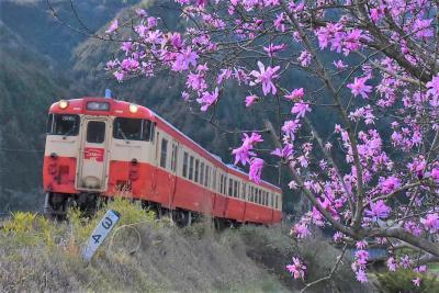 古い駅舎の残る津山線の旅 ~明治生まれの鉄道と花の里山風景~(岡山)