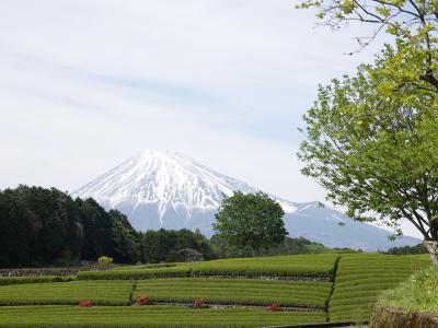 富士山を撮ろうと南麓をウロウロ… 2019.05.03