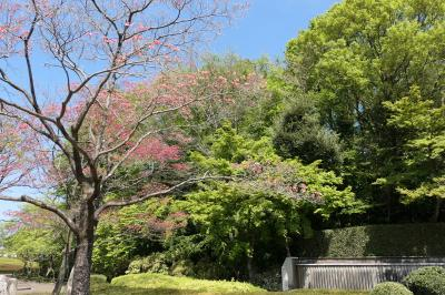 春の川口グリーンセンター♪ Vol.7:新緑の美しい木々や赤のつづし♪