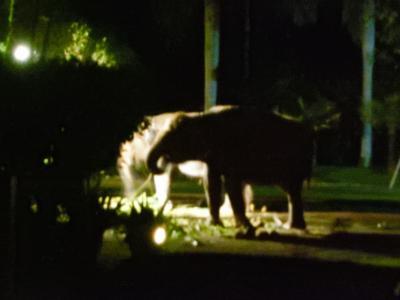 はじめまして、バリ島①暗闇に浮かび上がる象さんにドッキリ!