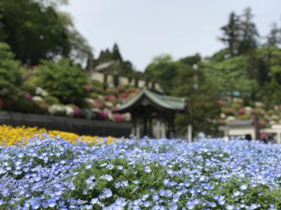 朝から成田山ほかを巡り、ランチはラ・クッチーナ ハナで
